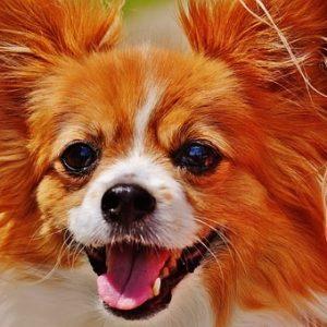 dog-1532754__340
